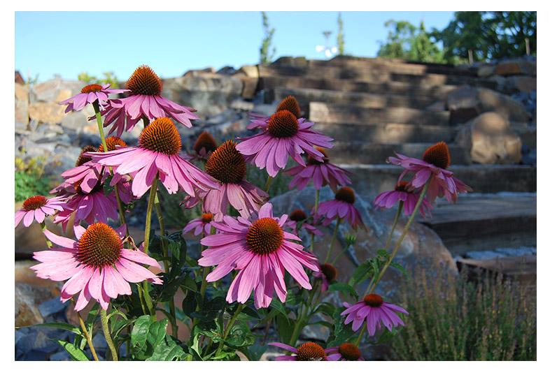 zahrada-projekce brusné zahrada