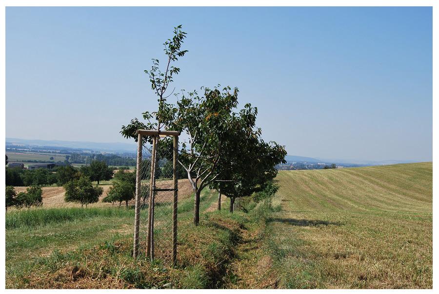 zahrada-projekce Sad Kladeruby