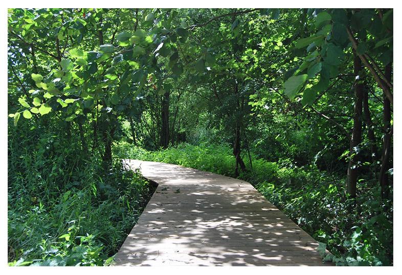zahrada-projekce brumov-bylnice lesopark